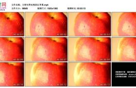 高清实拍视频丨大特写带水珠的红苹果