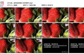 高清实拍视频丨旋转着的刚摘下的草莓特写