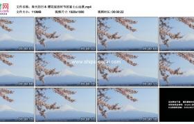 高清实拍视频素材丨春天的日本 樱花绽放时节的富士山远景