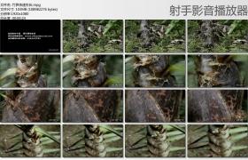 [高清实拍素材]竹笋快速生长