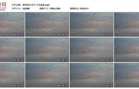 高清实拍视频丨黄昏的天空中飞鸟盘旋