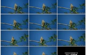 4K实拍视频素材丨一只小鸟站在随风摆动的竹枝上