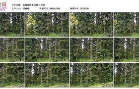 4K视频素材丨摇摄森林里的树木