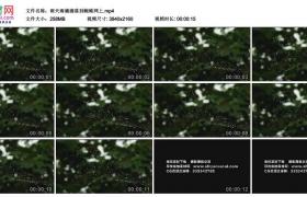 4K实拍视频素材丨雨天雨滴滴落到蜘蛛网上