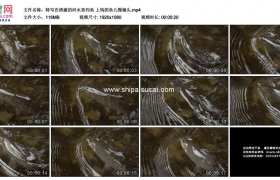 高清实拍视频素材丨特写在清澈的河水里钓鱼 上钩的鱼儿慢镜头