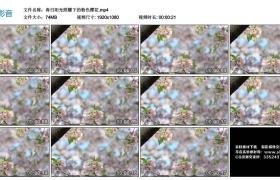高清实拍视频丨春日阳光照耀下的粉色樱花