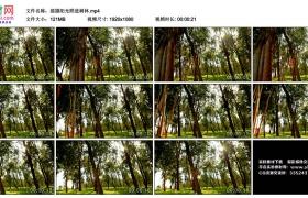 高清实拍视频丨摇摄阳光照进树林