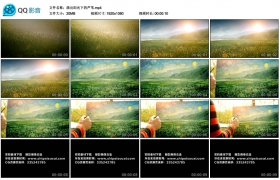 【高清实拍素材】画出阳光下的芦苇