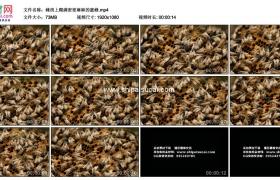 高清实拍视频素材丨蜂房上爬满密密麻麻的蜜蜂