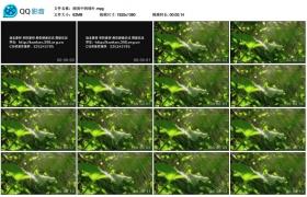 [高清实拍素材]细雨中的绿叶