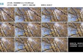 高清实拍视频丨仰拍摇摄蓝天白云下的白桦林