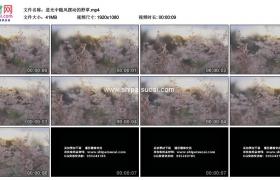高清实拍视频素材丨逆光中随风摆动的野花野草