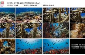 高清实拍视频丨水下摄影 海底的水草珊瑚及游动的鱼群
