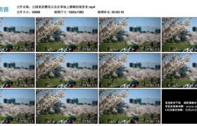 高清实拍视频丨公园里的樱花以及在草地上模糊的观赏者