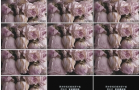 高清实拍视频素材丨摇摄一束枯萎的粉色玫瑰