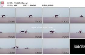 高清实拍视频素材丨几只蚂蚁爬来爬去