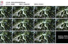 4K实拍视频素材丨仰拍阳光照进轻摆的树林