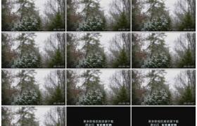 高清实拍视频素材丨冬天树林里雪花飘飞
