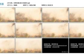 高清实拍视频丨浓雾弥漫过秋天的森林