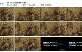 高清实拍视频丨微距拍摄蜂巢上的蜜蜂