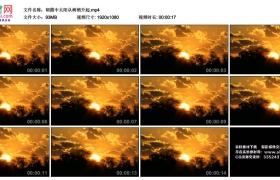 高清实拍视频丨朝霞中太阳从树梢升起