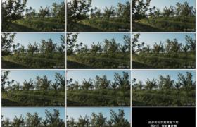 高清实拍视频素材丨摇摄阳光照射下的苹果园