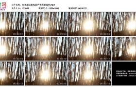 高清实拍视频素材丨阳光透过摇曳的芦苇照射进来