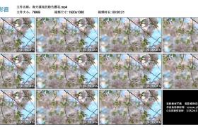 高清实拍视频丨春天漂亮的粉色樱花