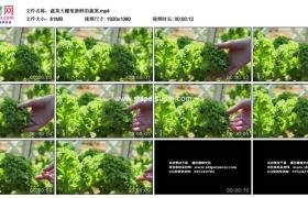 高清实拍视频素材丨蔬菜大棚里新鲜的蔬菜