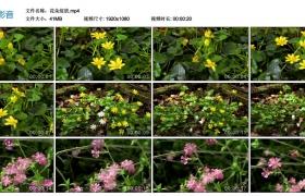 【高清实拍素材】花朵绽放