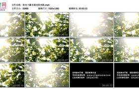 高清实拍视频素材丨阳光下灌木摇动的光影
