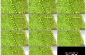 高清实拍视频素材丨特写一片绿叶上的纹理