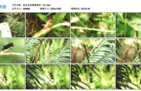 【高清实拍素材】昆虫实拍视频素材一组