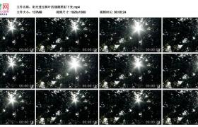 高清实拍视频丨阳光透过树叶的缝隙照射下来
