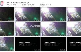 高清实拍视频素材丨阳光透过树木照射下来