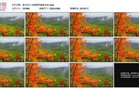 高清实拍视频素材丨秋天红叶为前景的森林风光