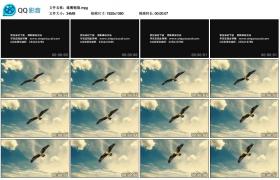 [高清实拍素材]雄鹰翱翔