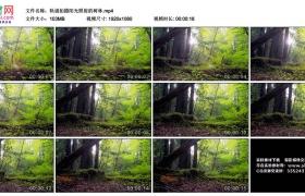 高清实拍视频丨轨道拍摄阳光照射的树林
