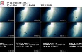 高清实拍视频丨仰拍山涧深潭中的游动的鱼
