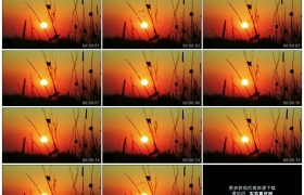 高清实拍视频素材丨清晨红色的朝霞中太阳缓缓升起照射着逆光中摆动的野草