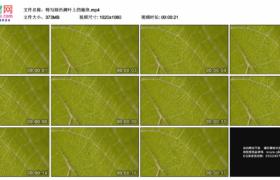 高清实拍视频素材丨特写绿色树叶上的脉络
