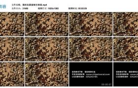 高清实拍视频丨微距拍摄蜜蜂在蜂巢