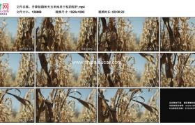 高清实拍视频素材丨升降拍摄秋天玉米地里干枯的秸秆