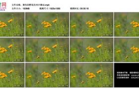 高清实拍视频素材丨黄色的野花在风中摆动