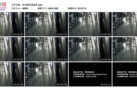 高清实拍视频丨阳光照射进森林