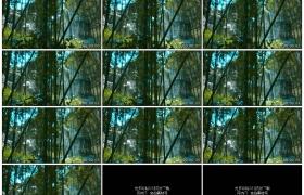 高清实拍视频素材丨移摄阳光照射下的竹林