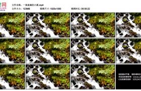 高清实拍视频丨一条流淌的小溪