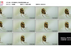 高清实拍视频丨特写蜘蛛网上等候猎物的蜘蛛