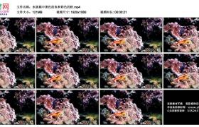 高清实拍视频素材丨水族箱中黑色的鱼和彩色的虾