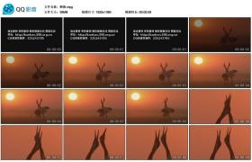 [高清实拍素材]鹤舞